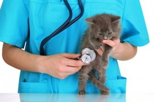 Consultation with the Veterinarian